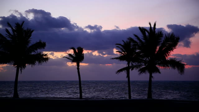 Tropical sunrise video