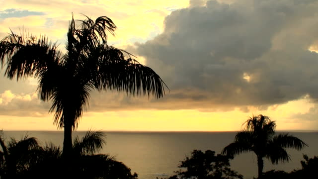 Tropical Sunset video