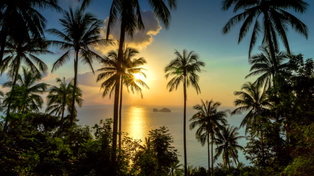 Tropical sunset with palms time lapse video
