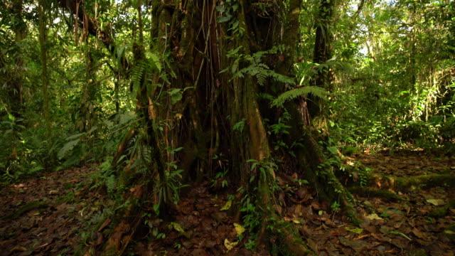 LA TU Tropical tree in the rainforest video