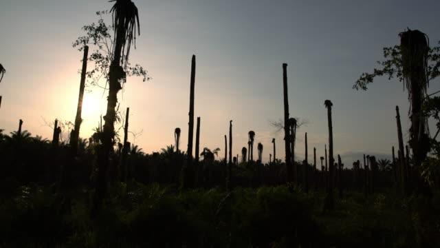 POV Tropical trees along a roadside video