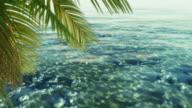 Tropical water. Loop video