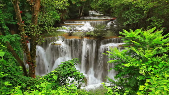Tropical Waterfall in Forest video