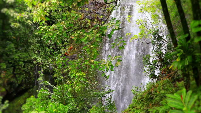 Tropical waterfalls in the lush forest of Maui, Hawaii video