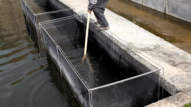 Trout farm video