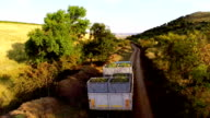Truck loaded with freshly picked grapes video