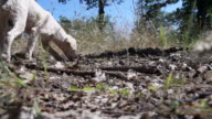 Truffles Dog Super Slow Motion Outdoors video