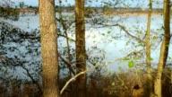 Trunks of Trees on Sunlight video