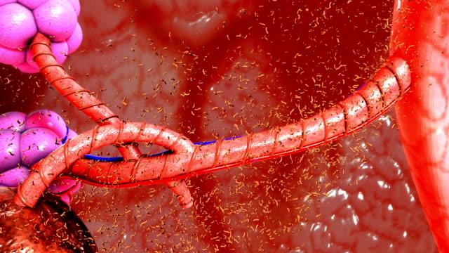 Tuberculosis Bacteria video