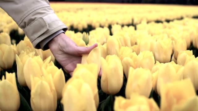 tulip care video