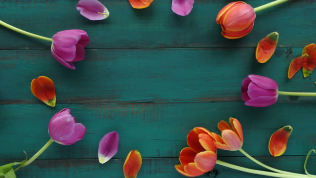 Tulip flowers bouquet assorted in oval shape for your text video