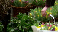Tulips and flowers in Amsterdam video