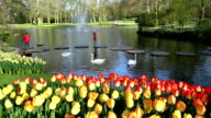 Tulips in the park Keukenhof. video