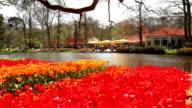 Tulips in the park Keukenhof. video