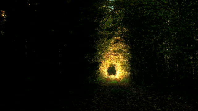 Tunnel in the woods. Autumn video