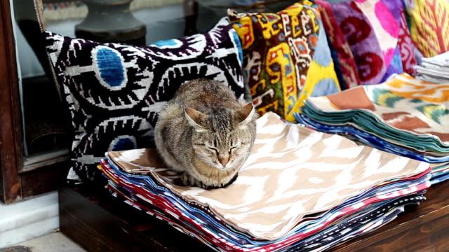 Turkish Cat in carpet video