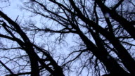 Turning beneath bare tree branches against winter sky video
