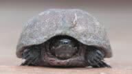 Turtle 20 - HD 30F video