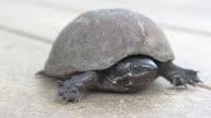Turtle 4 - HD 30F video
