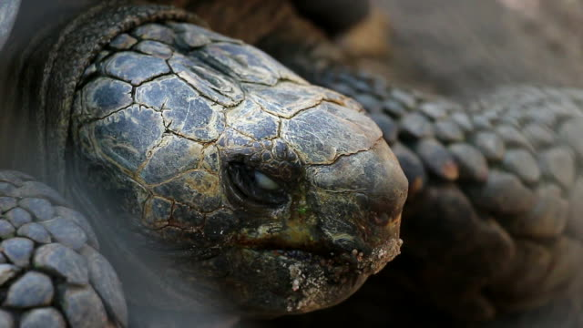 Turtle close eyes video