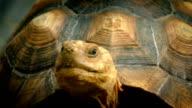Turtle Looks Around Closeup video