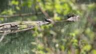 Turtle river video