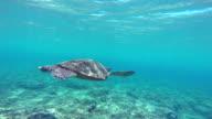 Turtle Swimming in the Ocean video