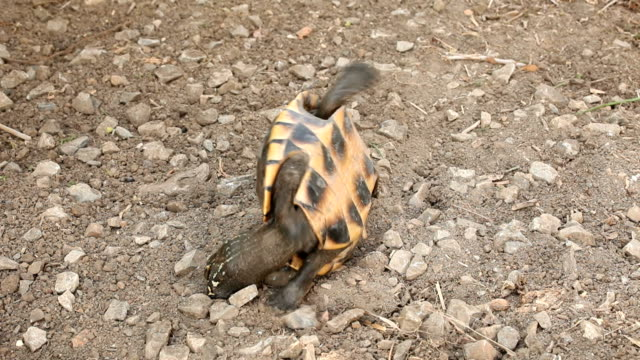 Turtle upside down video