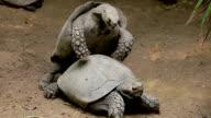 Turtles. video
