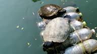 Turtles video