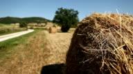 Tuscany Countryside and Vegetationat Summer video