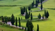 Tuscany cypress curve video