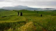 Tuscany cypress trees with track video