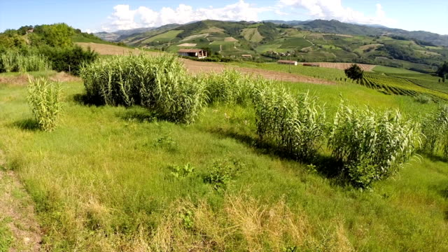 Tuscany landscape from a drone video