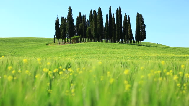 Tuscany Landscape with Cypress Tree, Panning right, HD Video video