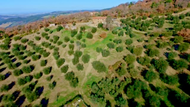 Tuscany, Olive field. Drone video