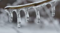 Twig covered in melting ice video