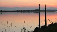 Twilight Herons on Pilings Preening by River video