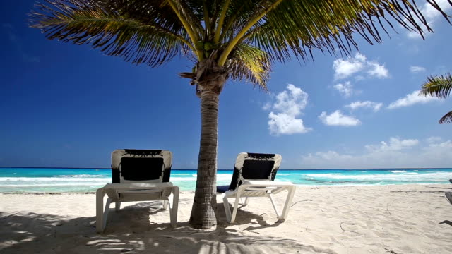 Two beach beds under palm tree on beach video