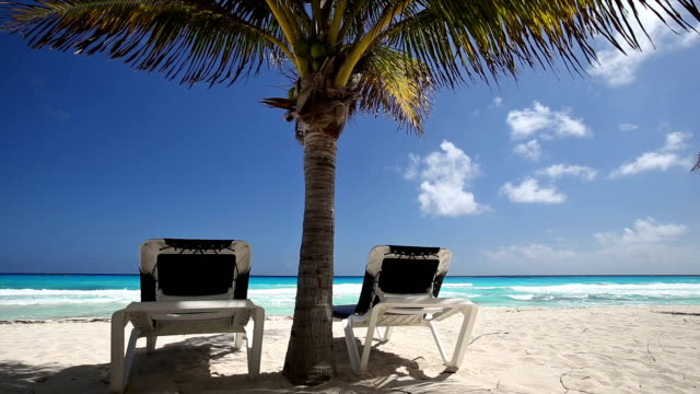 Two beach beds under palm tree on beachfront video