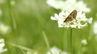 Two Beautiful butterfly on the flower video