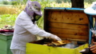 Two beekeepers at work. Gently smokes the bees in orchard video
