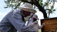 Two beekeepers working with frame to produce honey. video