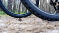 Two bikers start riding bikes through forest path. Friends cycling through wood. Low Angle View video