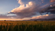 two birds fly through wheat landscape video