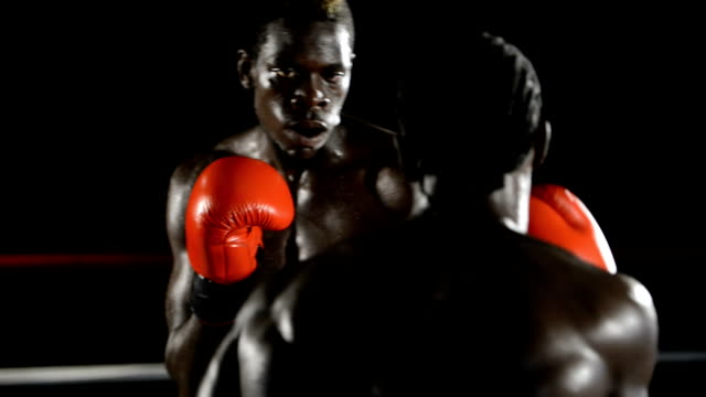 Two boxers in action video
