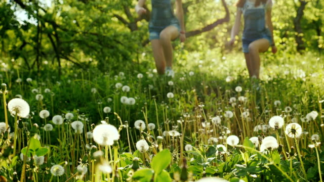 Two carefree girls are running around in the field of dandelions. Happy childhood, good time. 180 fps slow motion video video