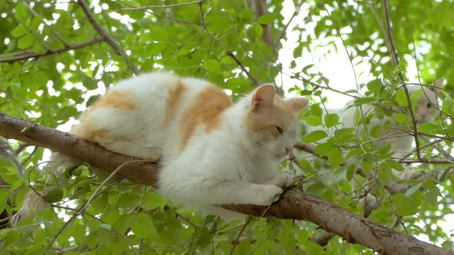 two cats on the tree slow motion video video