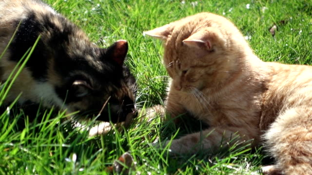 Two cute cats playing video