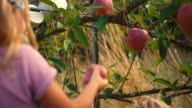 Two cute little girls picking apples off of a tree in a field video